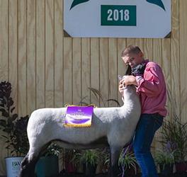 Mennen Club Lambs   Winners